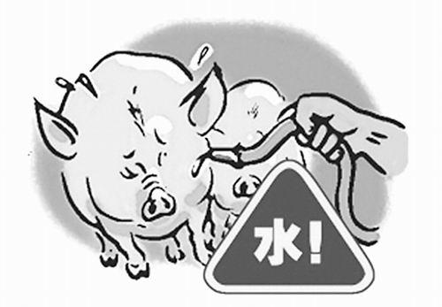 教你如何辨别注水肉,猪肉的含水量快速检测方法