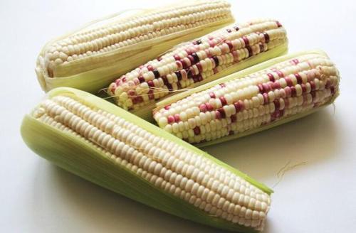 糯玉米水分含量测定影响:安全储藏、保鲜、加工生产