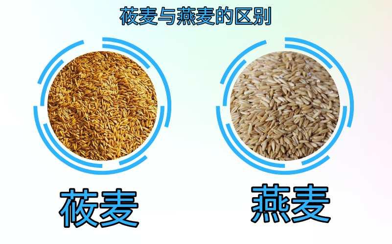 莜麦与燕麦质量标准的区别,产品加工应用,水分含量