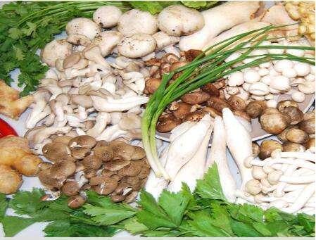 食用菌的种类,水分含量标准,检测方法